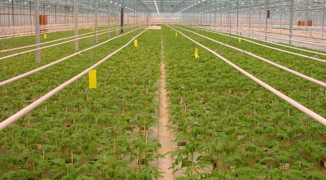 Greenhouses and environmental control