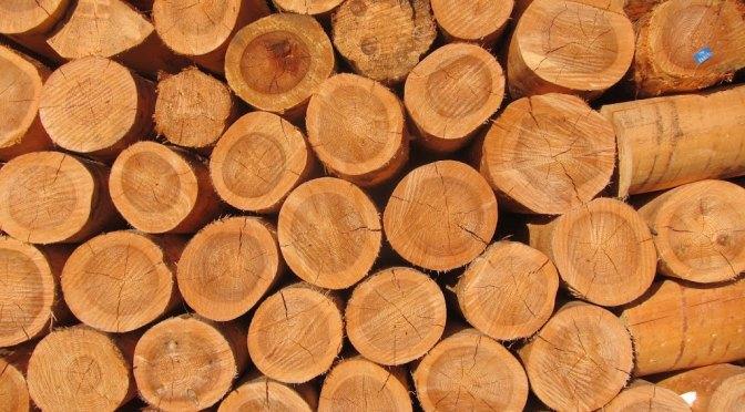 Timber Drying
