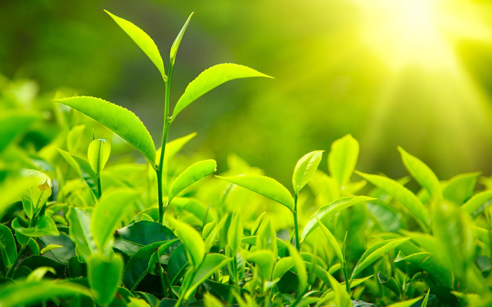 HOW PLANT MAKE FOOD (with image) · ProfKarim · Storify