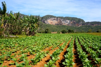 Tobacco-Fields-in-Vinales
